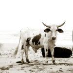 photography portfolio south africa